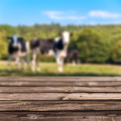 Plancher rustique, fond campagne et vaches