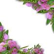 エンドウ豆と赤詰草のフラワーアレンジメント