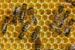 Bees convert nectar