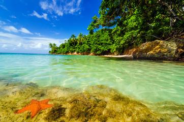 Starfish and Green Island