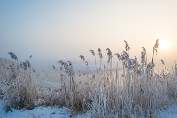 Frosty reed along a canal in sunlight