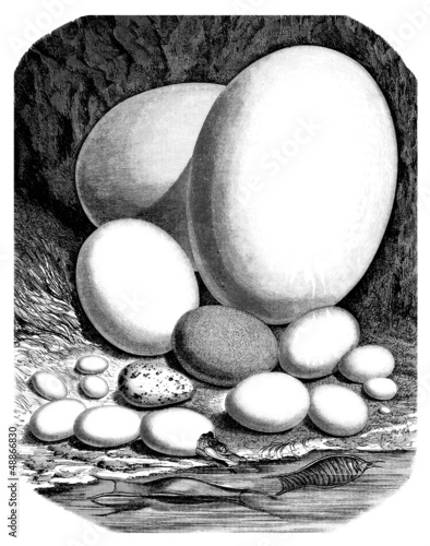 Eggs Comparison : various Animals