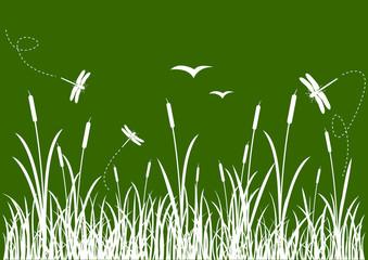 Roselière et ses libellules - fond vert