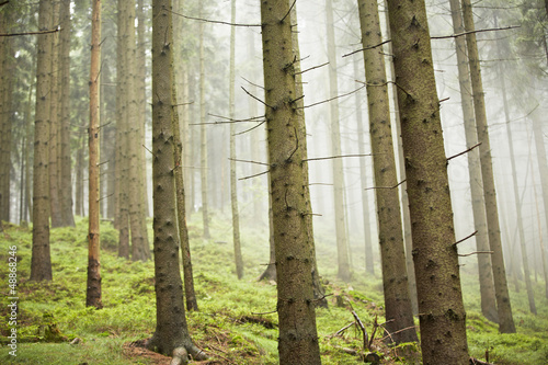 Foto op Canvas Bos in mist Forest in mystery fog, Czech Republic