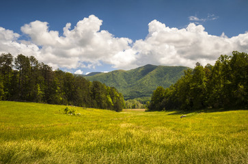 Cades Cove Great Smoky Mountains National Park Scenic Landscape