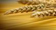 Wheat and spaghetti