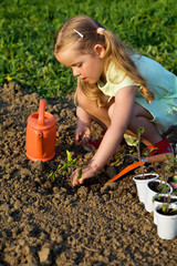Little girl planting tomato seedlings