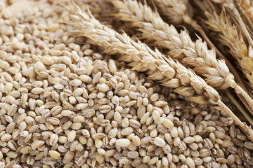 Barley Grains and Stalks