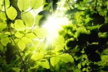 Blätter im Wald umrahmen die Sonne