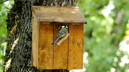 Nestbox and great tit bringing a caterpillar.