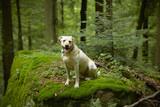 Fototapeta natura - na zewnątrz - Zwierzę domowe