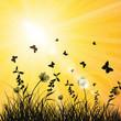 Hintergrund Sommer Sonne Natur