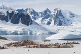 Petermann Island mit Pinguinkolonie