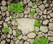 Fototapeten,wand,pflanze,oberfläche,steinmetz