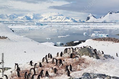 Plexiglas Antarctica Gruppen von Eselspinguinen auf Cuverville Island