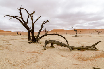 Dead trees under a rare cloudy sky in Deadvlei, Namibia