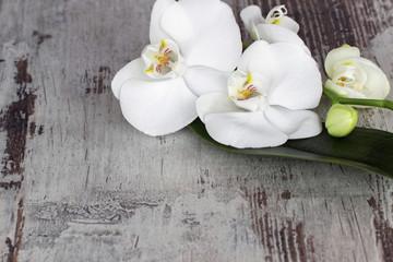 Weisse Orchidee auf altem Holz