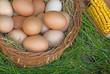 Fresh organic eggs