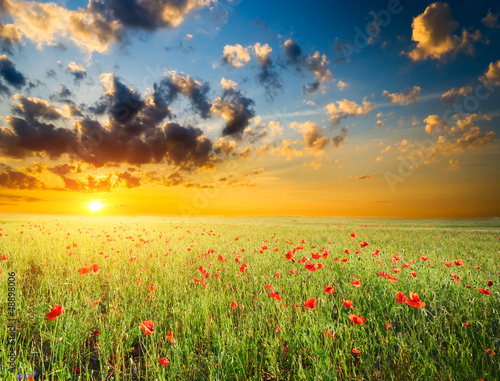 field with green grass and red poppies