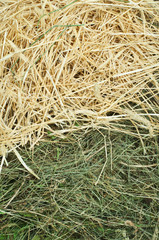 Straw and hay close up background