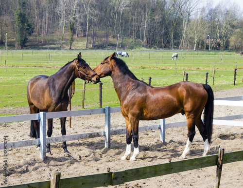 Two horses  behind a farm fence