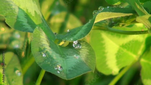 Leaves with dew on them in the morning