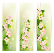 Three nature banners with blossoming tree brunch with spring flo