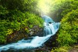Fototapety Creek in forest