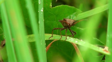 stink bug sitting on a blade of grass