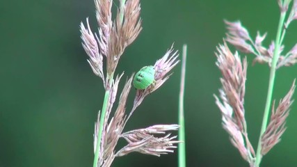 green beetle sits on the spike