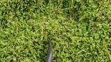 newt triton eft amphibian crawl walk moss poster