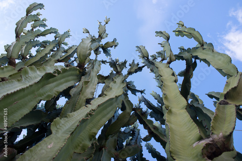 Cactus with blue sky background