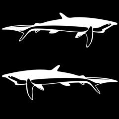 Shark,  black and white outline.