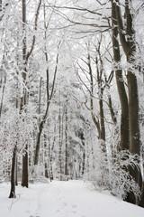 Waldweg Raureif Winter a.d. schwäbischen Alb