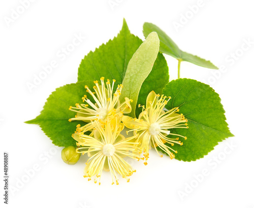 fresh lime flowers