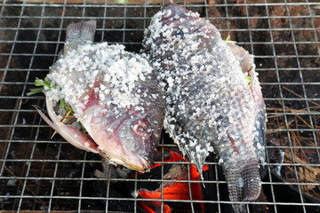 Grilling fish covered by salt on campfire