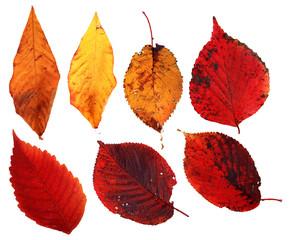 foglie rosse gialle