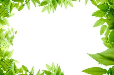 foglie verdi desktop