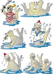 Seehunde Einzelmotive