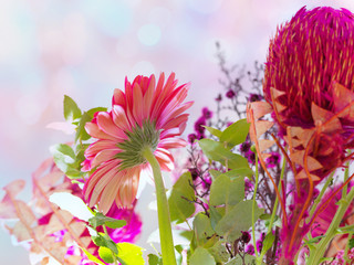Colorful flowers on bokeh backgroundSunraise
