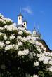 Frühling in Pillnitz