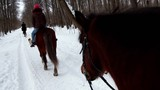 Woman ride horseback in forest at winter day