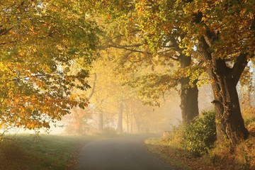 Rural road in a misty autumn morning