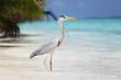 Stork on the ocean