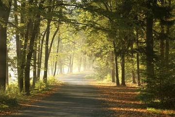 Fototapeta leśna droga we mgle