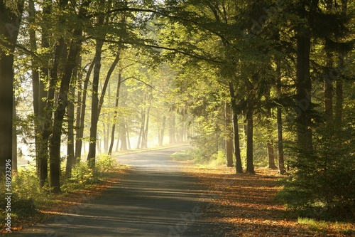Forest road in a foggy October morning