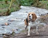 Fototapeta zwierzę - rzeka - Zwierzę domowe