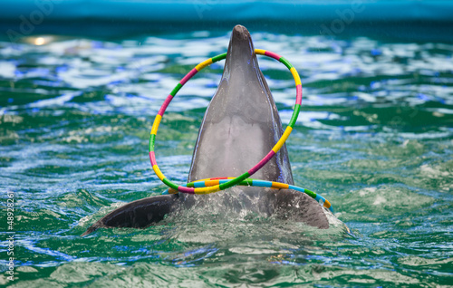 Fotobehang Dolfijn A dolphin in a show in a dolphinarium