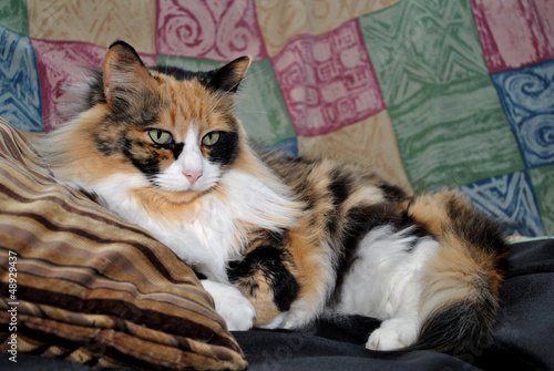 The Queen Calico Canine