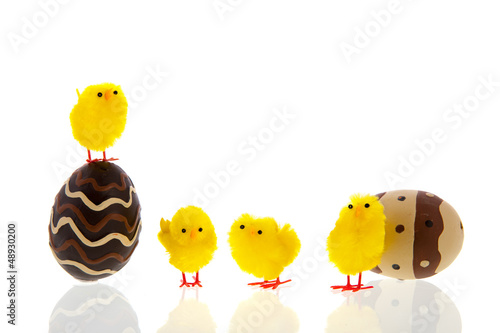Chocolate eggs with chicks